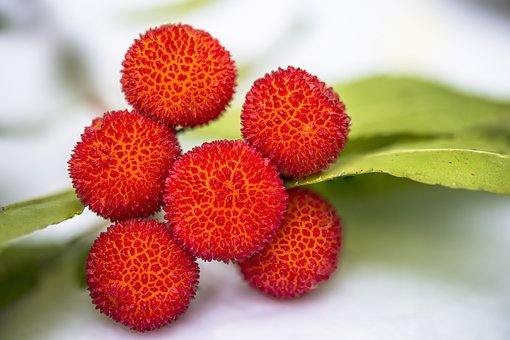 Arbutus, Fruit, Edible, Vitamins, Red, Arbutus Unedo