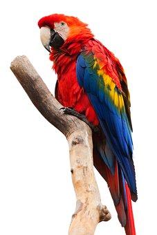 Animal, Ara Macao, Beak, Bird, Colorful, Fauna, Feather
