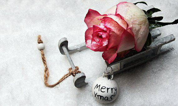Slide, Toboggan, Rose, Snow, Merry Xmas, Font