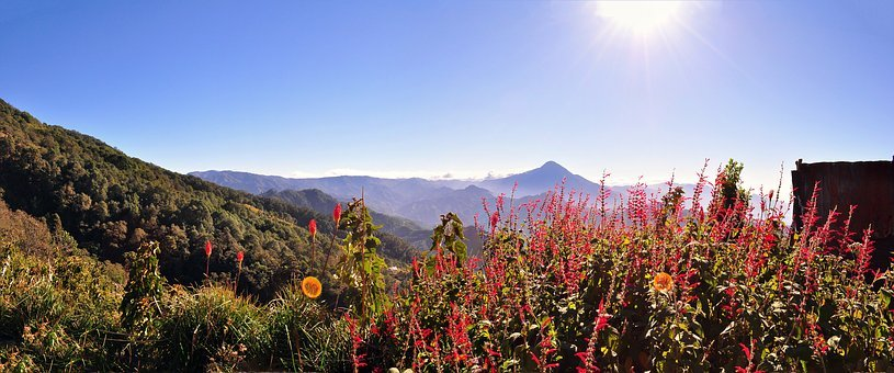 Mountain, Vegetation, Nature, Flowers, Field, Height