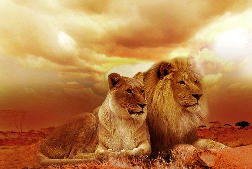 Lion, Safari, Africa, Landscape, Steppe, Sunset, Nature