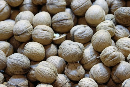Walnuts, Nuts, Macro, Close, Seedling, Walnut, Nut, Eat