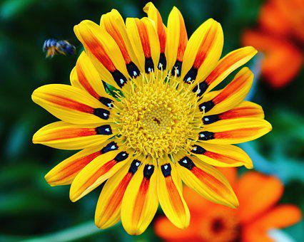 Tiger Flower, Bright, Colors, Yellow, Orange, Red