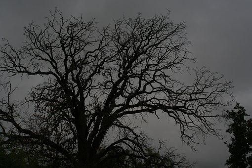 Spooky Old Tree, Tree, Dark, Halloween, Horror, Old