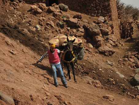 Atlas Mountains, Mule, Slip, Trekking, Hiking, Carrier