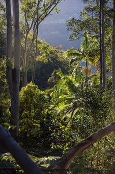 Rain Forest, Forest, Australia, Queensland, Gum Trees