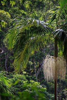 Rain Forest, Forest, Australia, Queensland, Palm