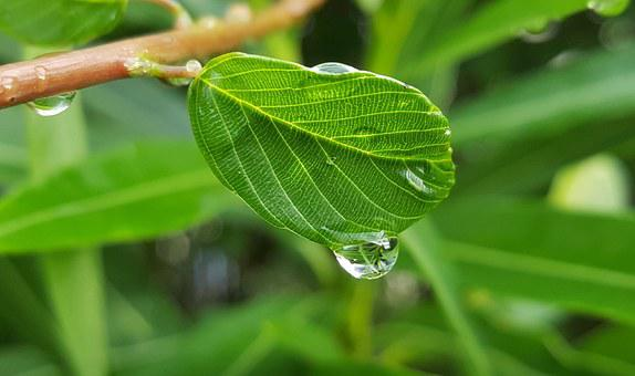 Leaf, Leaves, Wet, Water, Droplet, Beads, Tears, Cry
