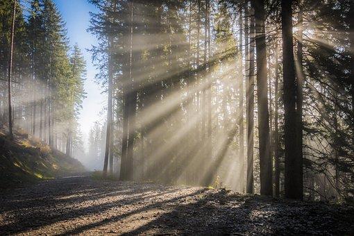 Sunbeam, Sun, Fog, Sky, Sunrise, Rays, Light Effect
