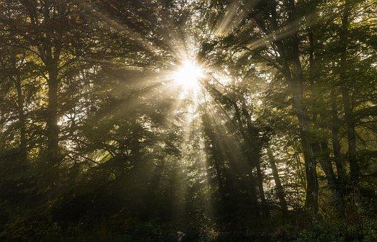 Autumn, Sun, Tree, Light, Forest, Fall Leaves