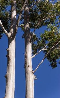 Trees, Rain Forest, Forest, Australia, Queensland