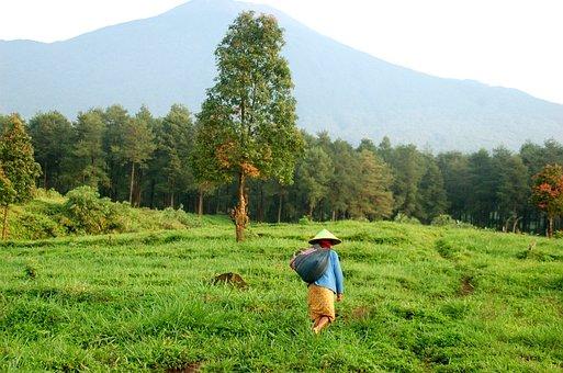 Farm, Java, Indonesia, Mount, Asia, Travel, Sunrise