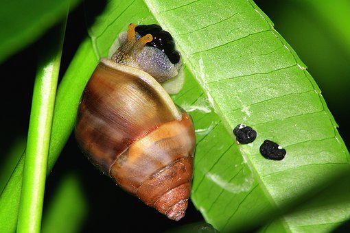 Leaf, Snail, Egg, Lay, Nature, Green, Shell, Gastropod