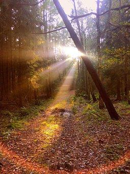 Forest, Autumn, Mushroom, Nature, Leaves, Cobweb