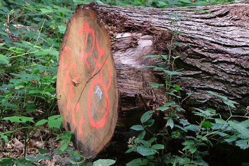 Tree, Log, Like, Value Wood, Mark, Forestry, Forester