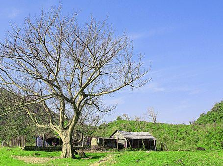 Field, Cottage, Landscape, Nature, Rural, Village