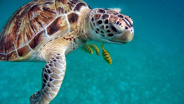 Water, Sea, Diving, Underwater, Ocean, Sub, Immersion