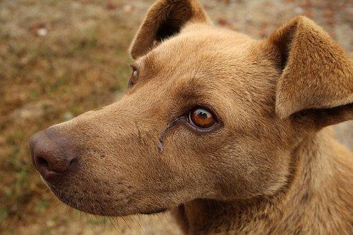 Canine, Sad Dog, Stray Dog, Race, Abandoned, Sick Dog