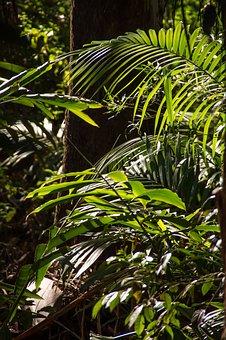 Rain Forest, Forest, Australia, Queensland, Palms