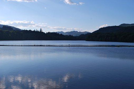 Nature, Scotland, Loch Lomond