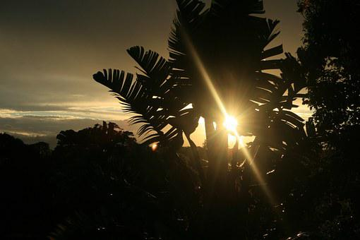 Tree, Wild Banana, Strelitzia, Giant, Sub Tropic, Sky