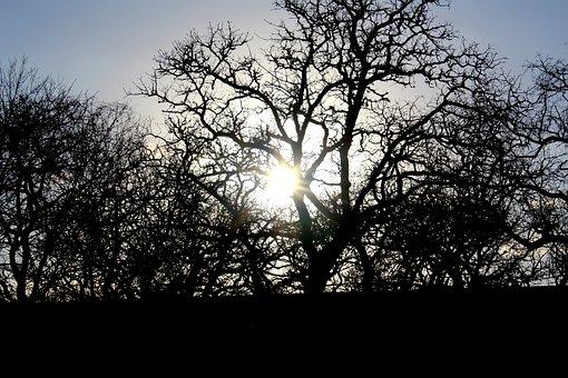 Sun, Tree, Nature, Landscape, Forest, Sky, Sunlight