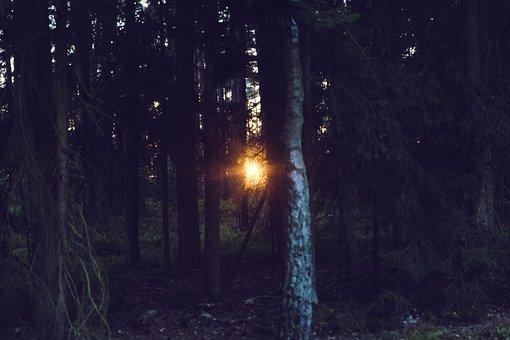 Sunset, Rays, Light, Forest, Mood, Sun, Nature