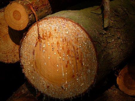 Tree, Cry, Nature, Wood, Pine, Felling Trees, Log