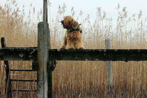 Web, Boardwalk, Reed, Animal, Dog, Alone, Wait, Stand
