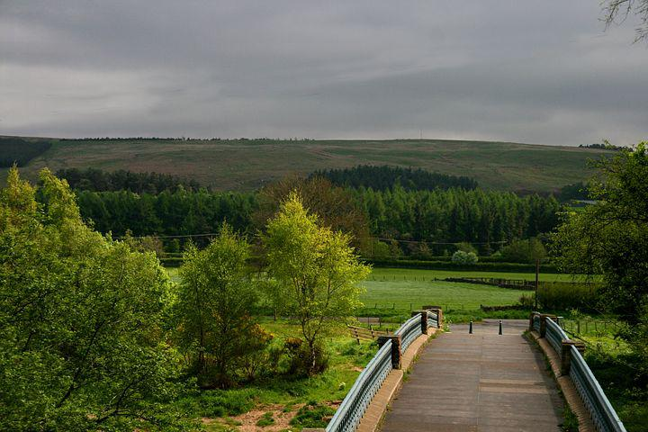 Bridge, Meadow, Green, Scene, Tree, Angle, Calander