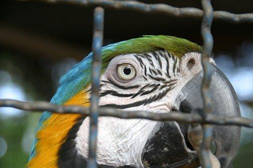 Bird, Arara Azul, Brazil, Cage, Macaw, Fly, Wings