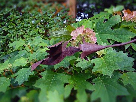Hummingbird, Decorative, Decorative Hummingbird