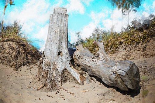 Drift Wood, Beach, Wood, Driftwood, Summer, Coast, Blue