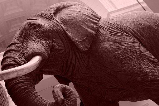 Elephant, Museum, Animal, Ancient, Archeology, Monument