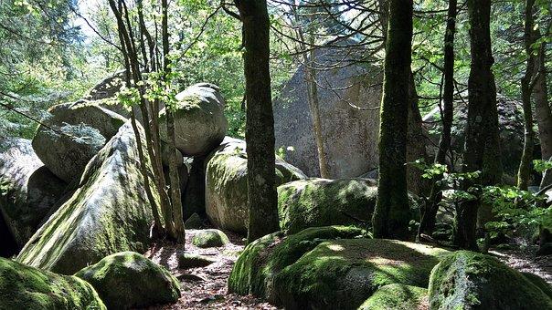 Mystical, Black Forest, Forest, Moss, Günter Rock