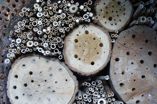 Insect Hotel, Insect, Insect House, Insect Asylum