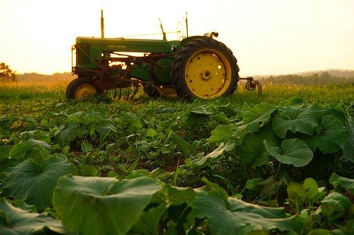 Agriculture, Tractor, John Deere, Green, Field, Pumpkin