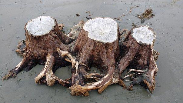 Driftwood, Stump, Tree Stump, Nature, Beach, Sand