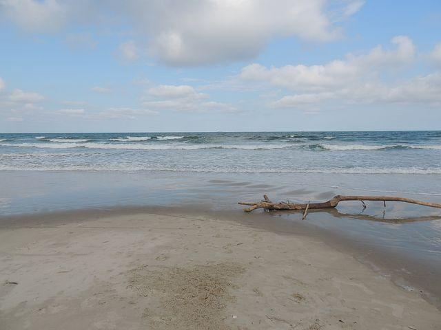 Beach, Driftwood, Ocean, Sky, Rainy