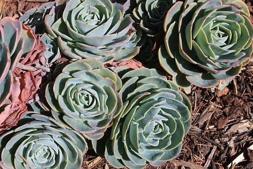 Plant, Outdoor, Succulent, Garden, Summer, Nature