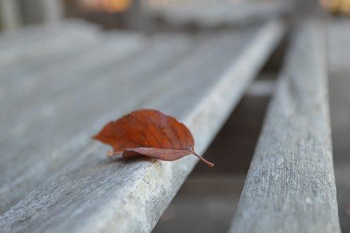 Leaf, Bench, Autumn, Park, Season, Nature, Fall, Leaves
