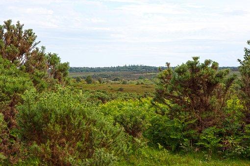 Landscape, View, Vista, Summer Landscape