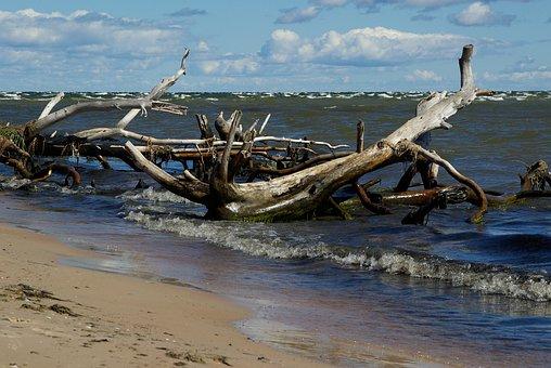 Baltic Sea, Beach, Driftwood, Waves, Deadwood