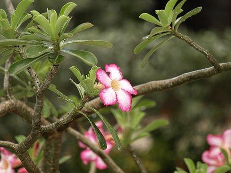 Blossom, Bloom, Tropics, After, The, Rain, Tropical