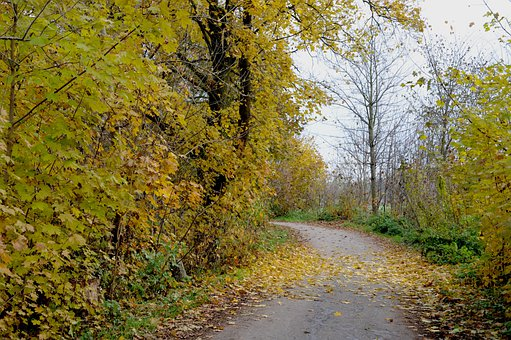 Autumn, Leaves, Trees, Bicycle Path, Alte Landstrasse