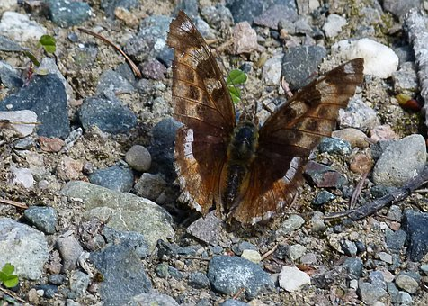 Butterfly, Rocks, Sitting, Insect, Nature, Animal