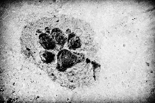 Footprint, Dog, Friend, Black And White, Water, Cement
