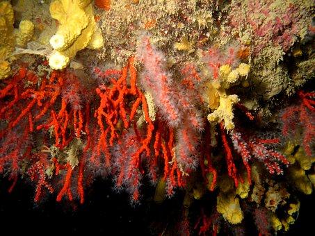 Corals, Sea, Underwater, Depth, Water, Diving