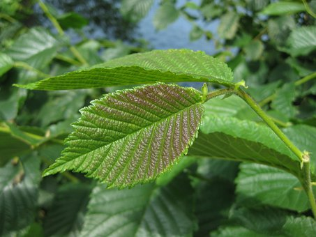 Leaf, Plant, Nature, Garden, Bicolor