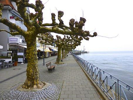 Trees, Seaside, Colonnade, Beach Front, Gnarled, Winter